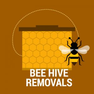 new mexico bee removal in albuquerque santa fe free swarm removal